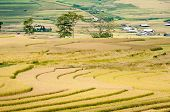 Terraced Fields, Village In The Distance, Mu Cang Chai District, Yen Bai Province, Vietnam