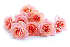 stock photo of rose flower  - pile of pink rose blossoms on white background - JPG