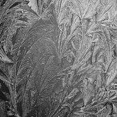 ice flower black an white