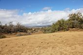 Spain. Gran Canaria Island. Dunes Of Maspalomas