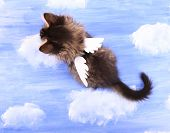 Beautiful kitten with paper wings, on bright background