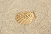 Colorful seashell on sand background