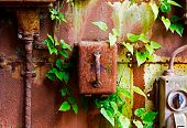 stock photo of contactor  - Old electrical panel on a iron wall and leaves of ivy - JPG