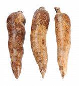 Three Whole Manioc
