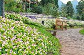 Chair In The Flower Garden