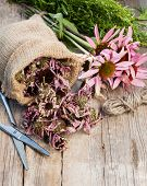 Bunch Of Healing Coneflowers, Estragon And Sack With Dried Echinacea Flowers On Wooden Plank, Herbal