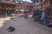 Nepalese Dogs Sleep In Bhaktapur