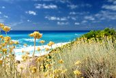 yellow wild flowers and sea