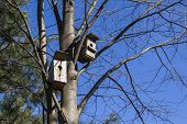Birdhouses await their owners.