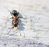 Ant On The Rock