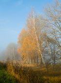 Autumn - Mist - Gold Trees
