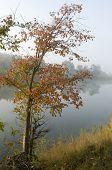 Autumn Tree Near The Water