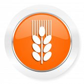 grain orange computer icon