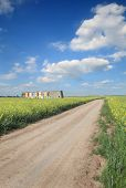 Agriculture, Country Road Through Canola Field