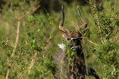 Buck Wildlife