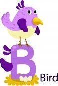illustration of isolated animal alphabet B for bird on white