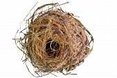 Bird 's Nest