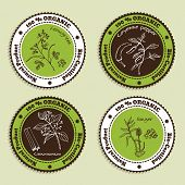 foto of fenugreek  - Set of Natural Organic Product badges - JPG