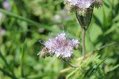 Purple flower close-up