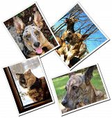 foto of cat dog  - collage with dogs and cats happy mongrels   photos used for the collages are made by me - JPG