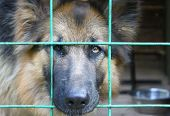German shepherd in the cell