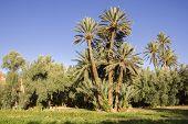 Living Oasis, Lush Palms