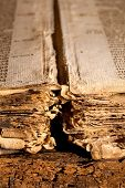 Closeup of the loose tattered pages of a 300 years old gothic book