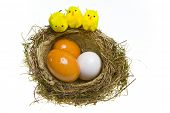 Nest with eggs and chickens on white background