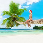 Cute Woman In Bikini And Christmas Hat On Palm Tree At Tropical Beach