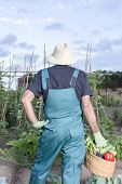 Farmer With A Basket Of Vegetables