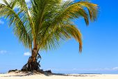 Palm Tree On A Tropical Beach Against A Blue Sky