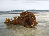 Algas en una playa de arena