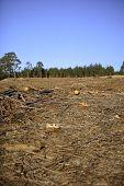 pic of deforestation  - Deforestation scene - JPG