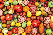 image of plum tomato  - colorful tomatoes - JPG