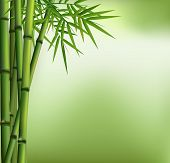 stock photo of bamboo  - Illustration of Green bamboo grove isolated with green background - JPG