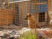 foto of homeless  - Abandoned homeless dog in kennel at animal shelter  - JPG