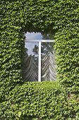Window With Ivy Leafs Over It