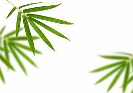 picture of bamboo leaves  - bamboo leaves isolated on white background - JPG