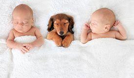 image of puppy eyes  - two Sleeping newborn babies with a dachshund puppy - JPG