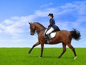 image of girth  - dressage - JPG