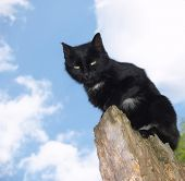 Black Cat on skyblue background (look down)