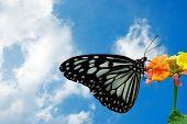 Geschwollene Wolken und ein Schmetterling