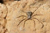 mystical spider