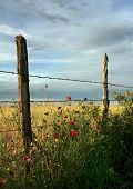 Fence Line Flowers