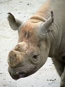 Rhinostock