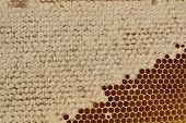 Honeycell