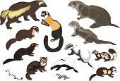 illustration with fur animals collection isolated on white background