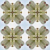 Kaleidoscope Pattern Of Dogwood Blossoms