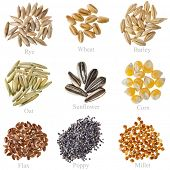 Collection Cereal Grains and Seeds  : Rye, Wheat, Barley, Oat, Sunflower, Corn, Flax, Poppy, Millet