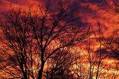 Morning Sunrise Silhouette